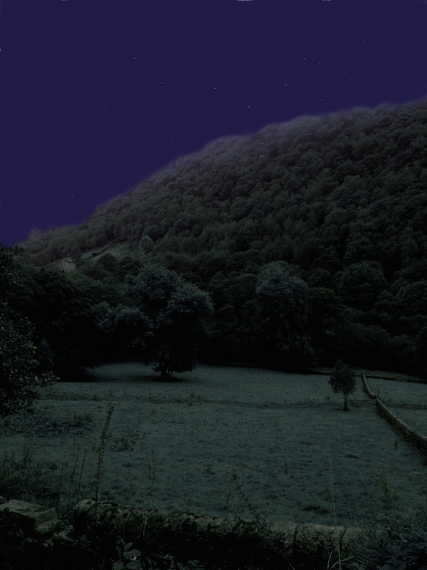 Field and woods at night