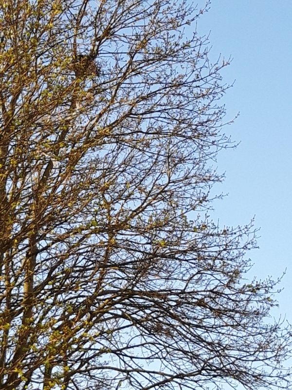 Croydon Street crow's nest