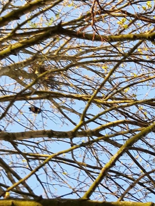 Croydon Street crow's nest with bird to left