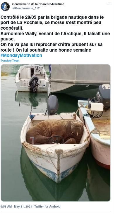 French gendarmerie tweet with photo showing walrus asleep in boat.